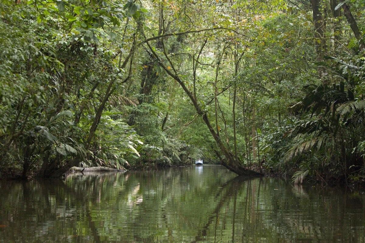 parc national tortuguero