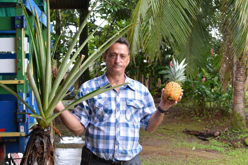 ananas costa rica belicio