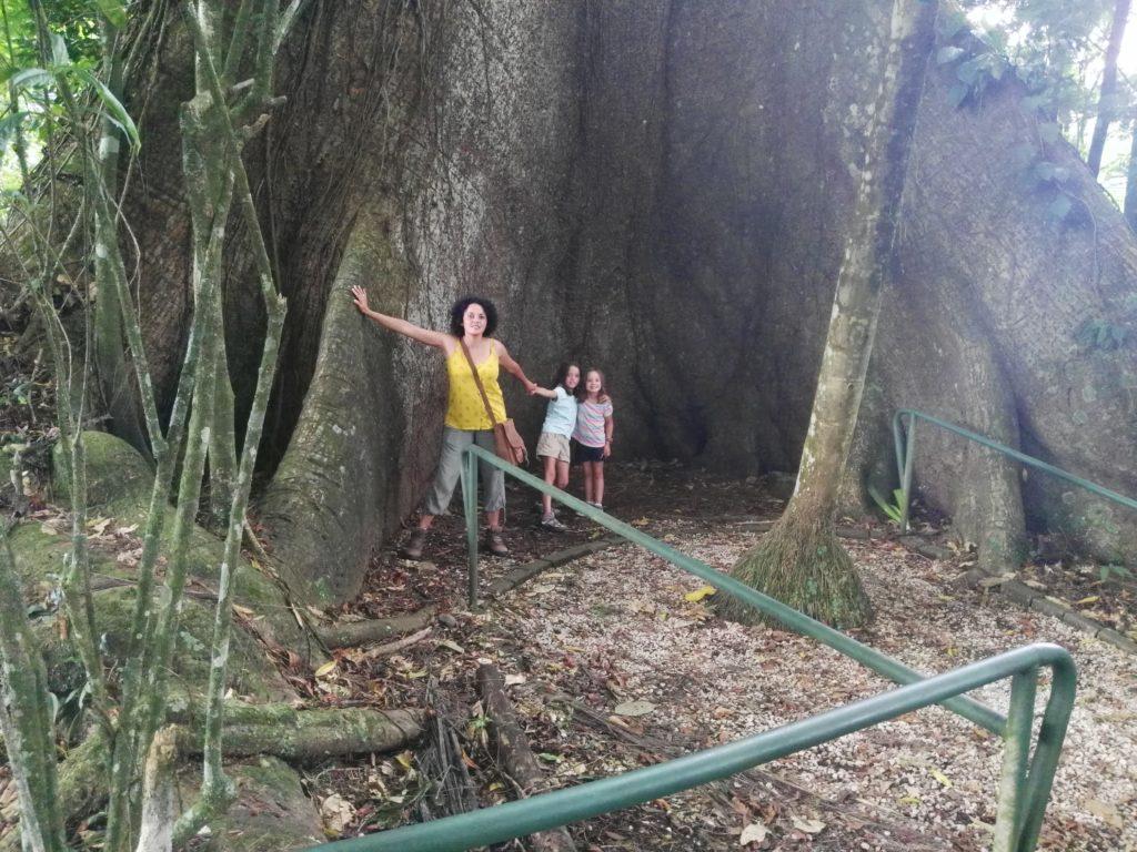 arbre costa rica famille