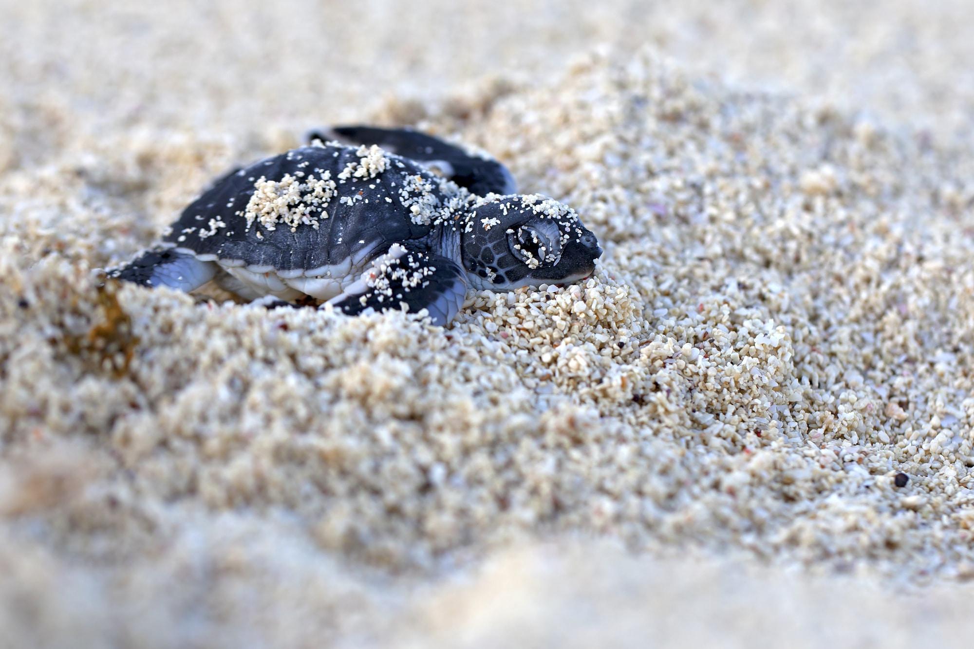 tortue bebe costa rica
